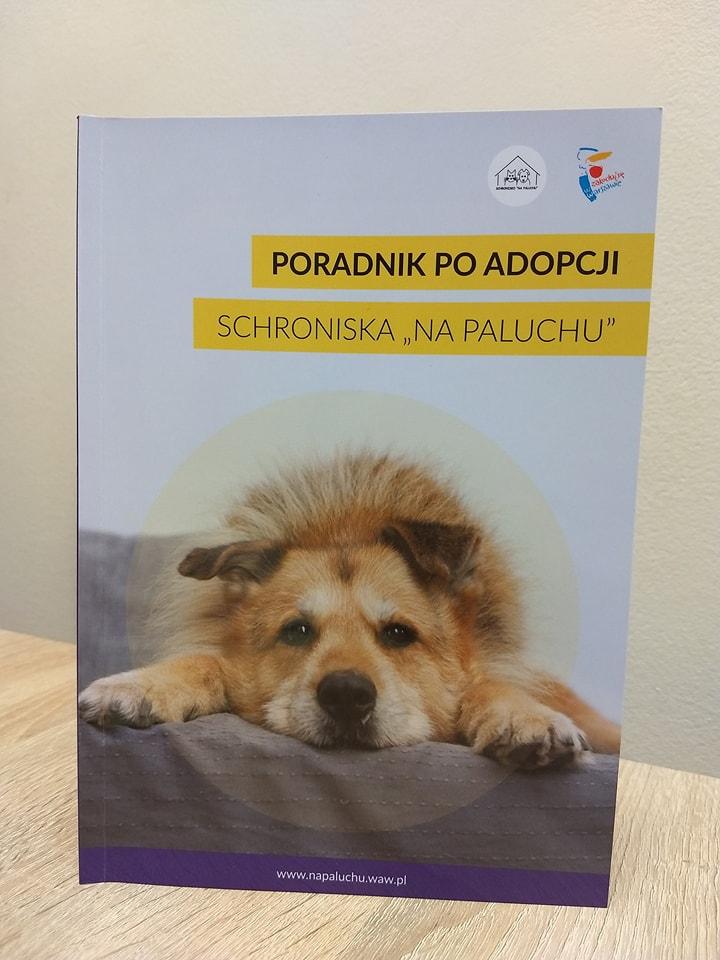 Zasady postępowania z psem po adopcji.