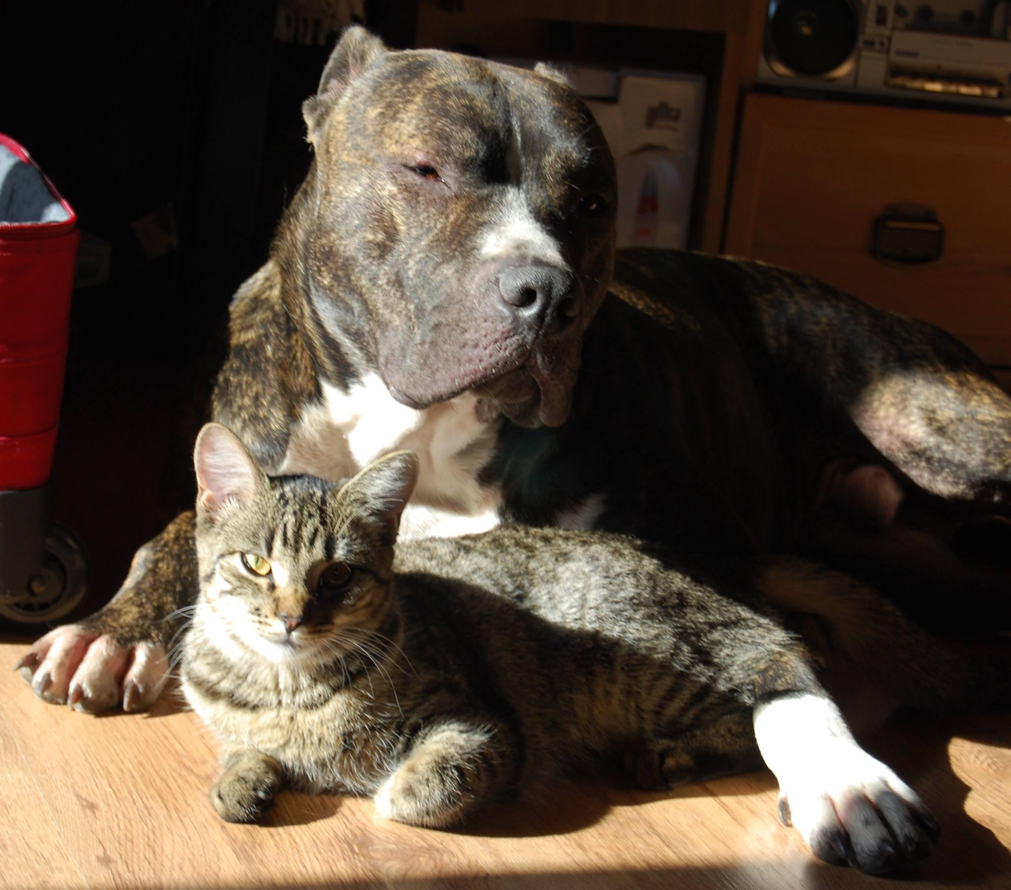 Wprowadzenie psa do domu z kotem