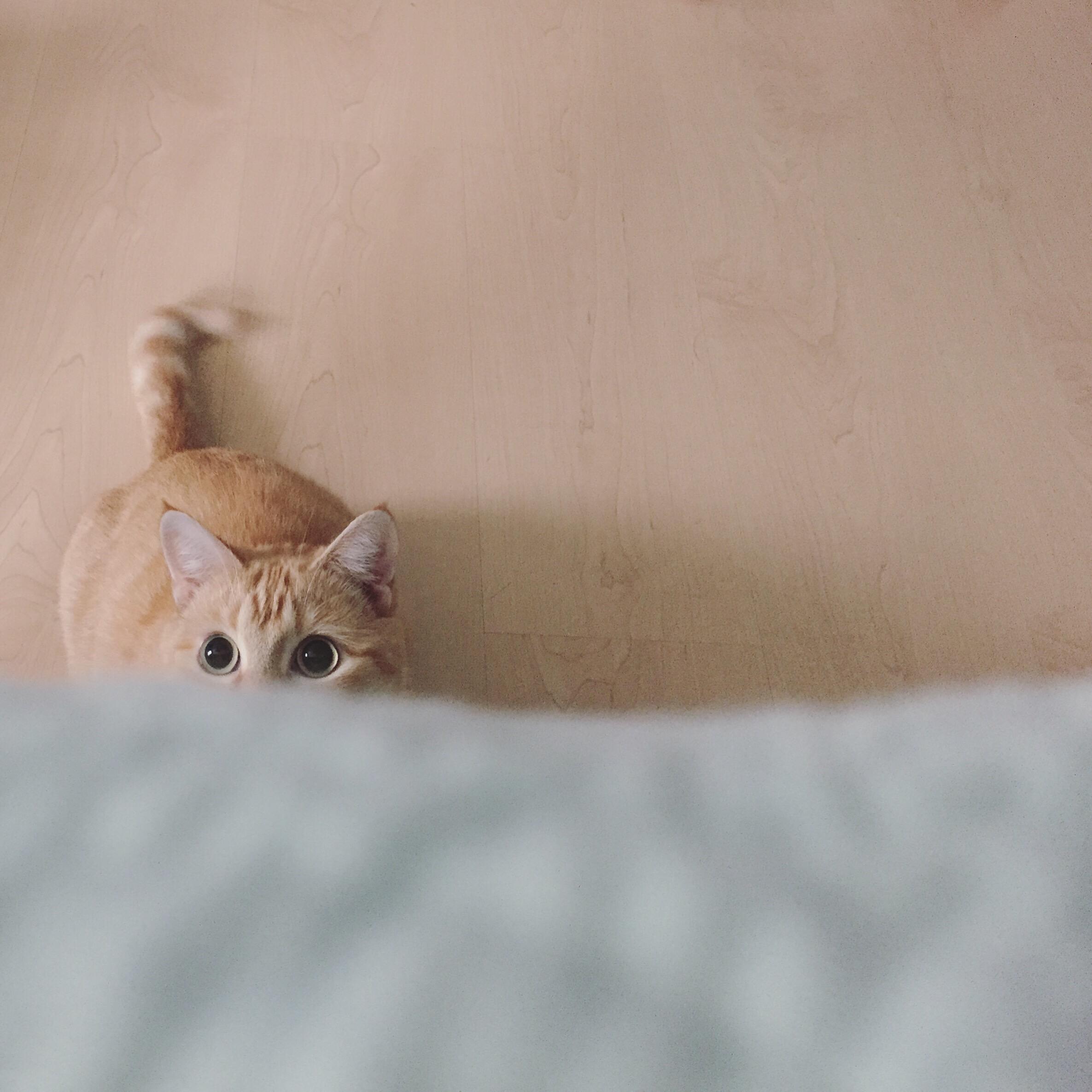 Jak podać kotu tabletkę?