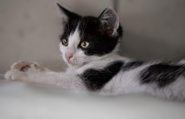 Dlaczego kot załatwia się poza kuwetą?