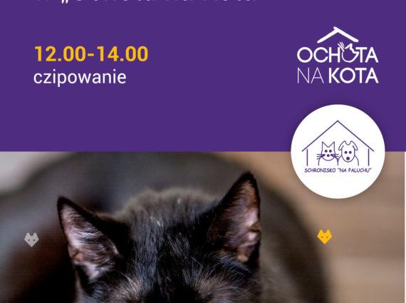 Bezpłatne czipowanie kotów